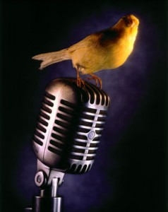 Picture of a bird on a microphone